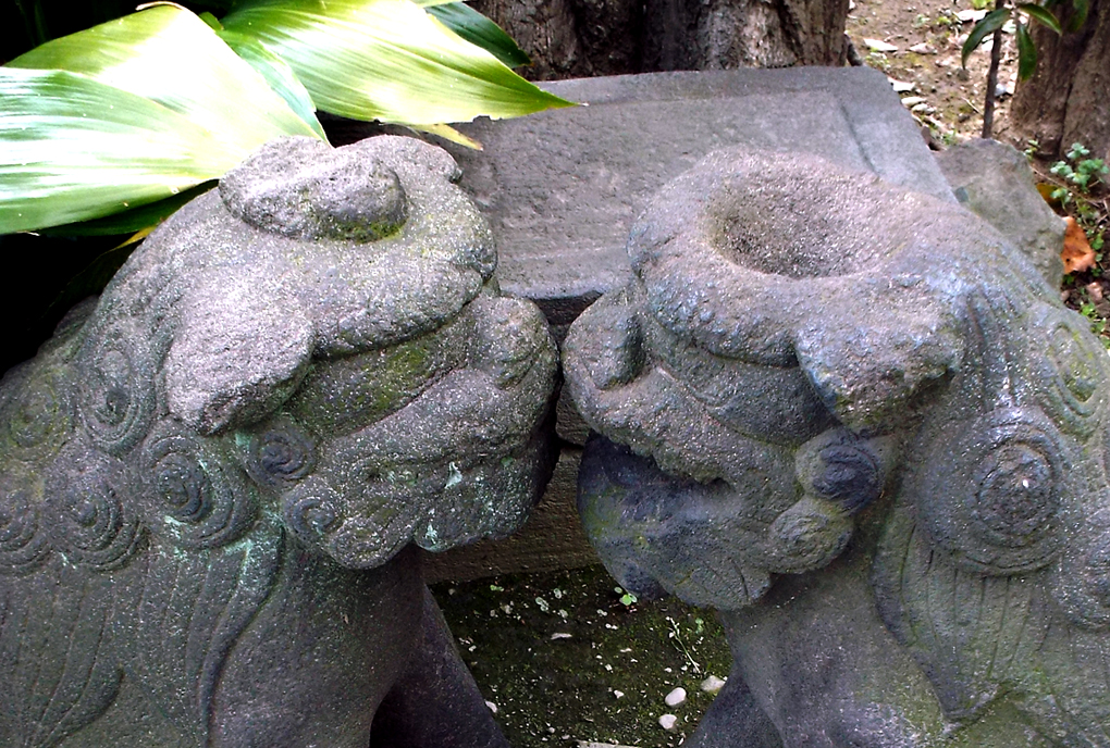 6-B2 元麻布氷川神社のカッパ狛犬B頭頂部#